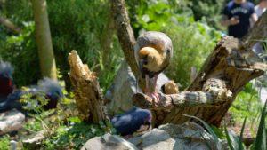 Ibis dans la jungle tropicale