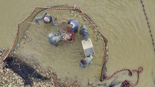 Vue en drone pêche dombes